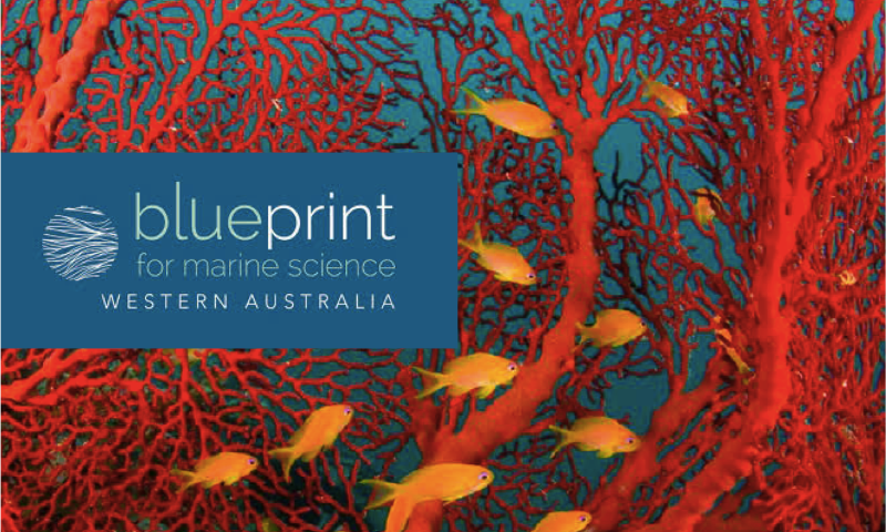 Launch of wa blueprint for marine science nera national energy improved collaboration for the sustainable management of our marine environment malvernweather Images